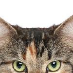 Cat peaking at you.